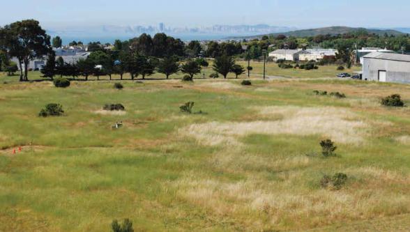 The prairie grassland of the Richmond Field Station