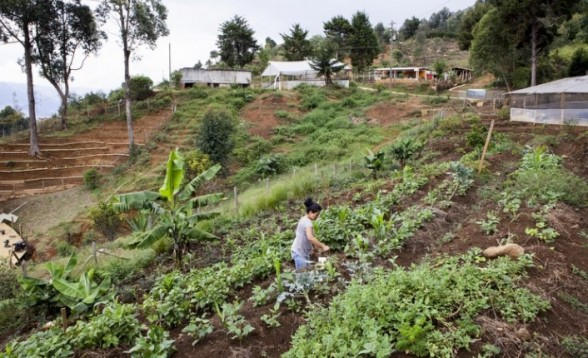 Terraced gardens not only provide a place for locals to grow food but also help prevent landslides on the steep slopes. (Yvonne Brandwijk)